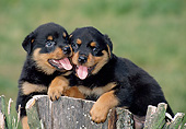 PUP 12 GL0001 01