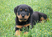 PUP 12 GR0005 01