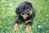 PUP 12 GR0006 01