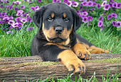 PUP 12 GR0009 01