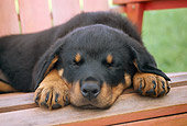 PUP 12 GR0016 01