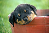 PUP 12 GR0018 01