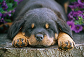 PUP 12 GR0019 01