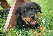 PUP 12 GR0020 01