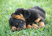 PUP 12 GR0025 01