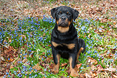 PUP 12 LS0001 01