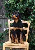 PUP 12 CE0002 01