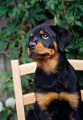 PUP 12 CE0003 01