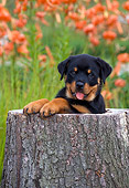PUP 12 CE0004 01