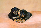 PUP 12 FA0004 01