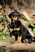 PUP 12 RC0001 01