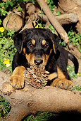 PUP 12 RC0002 01