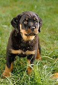 PUP 12 RC0003 01