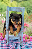 PUP 12 RC0004 01