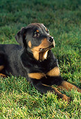 PUP 12 RC0006 01