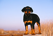 PUP 12 RK0008 02