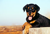 PUP 12 RK0009 09