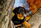 PUP 12 RK0012 03
