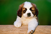 PUP 13 GR0013 01