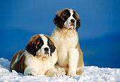 PUP 13 KH0002 01