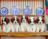 PUP 13 RK0003 08
