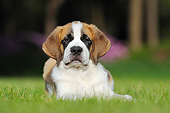 PUP 13 SS0002 01