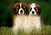 PUP 13 GR0005 02