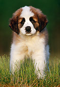 PUP 13 GR0012 01