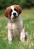 PUP 13 SS0001 01