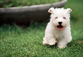 PUP 14 AB0004 01