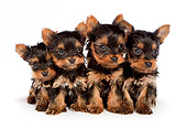 PUP 14 BK0009 01