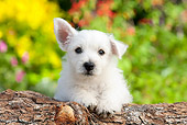 PUP 14 BK0011 01