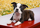 PUP 14 BK0018 01