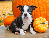 PUP 14 BK0019 01