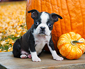 PUP 14 BK0020 01