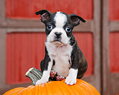 PUP 14 BK0023 01