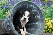 PUP 14 BK0024 01