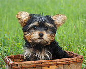 PUP 14 BK0026 01