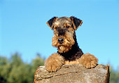 PUP 14 CB0001 01