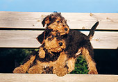 PUP 14 CB0002 01