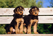 PUP 14 CB0003 01