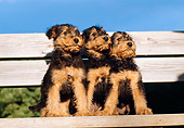 PUP 14 CB0004 01