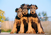 PUP 14 CB0005 01