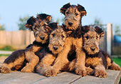 PUP 14 CB0006 01