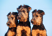 PUP 14 CB0007 01