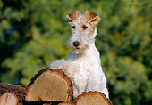 PUP 14 CB0009 01
