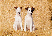 PUP 14 CB0013 01