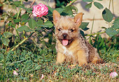 PUP 14 CB0016 01