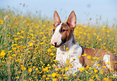 PUP 14 CB0018 01