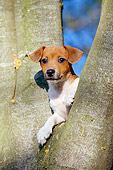 PUP 14 CB0021 01